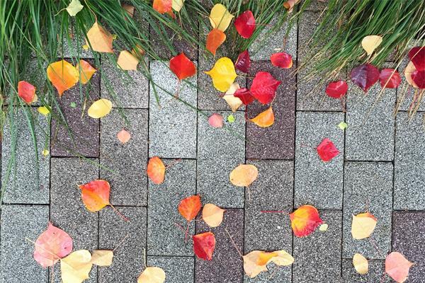紅葉と秋のブレンドコーヒー