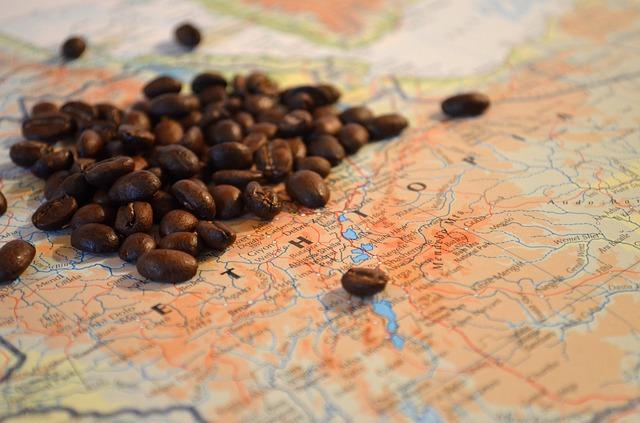 新豆発売のお知らせ:エチオピア コチェレ