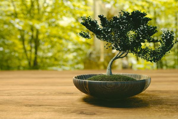 夏の盆栽カフェ開催について