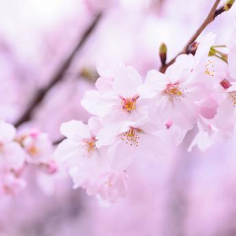3/27(月)臨時休業および3/28(火)特別営業のお知らせ
