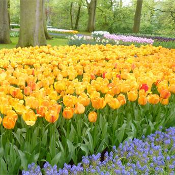 新豆発売のお知らせ:春の季節ブレンド『ブルーム』 シティロースト