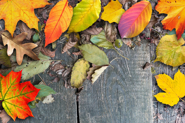 autumn-1684504_1280.jpg